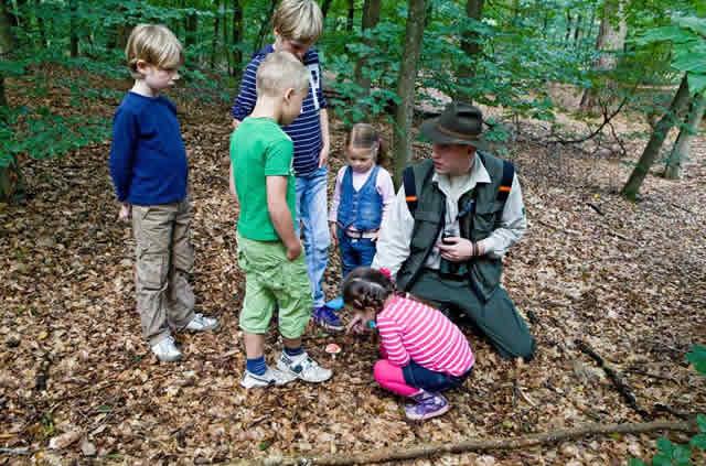 Kinderen op avontuur met de boswachter